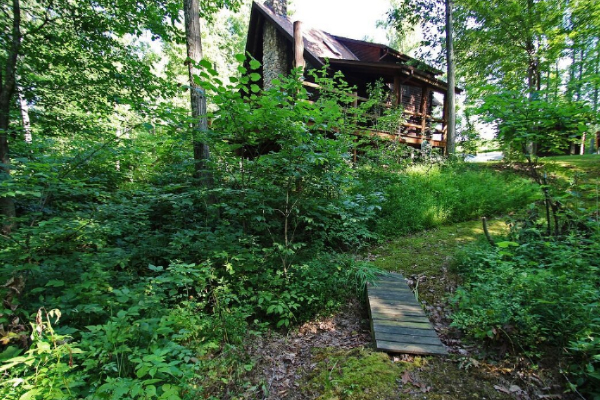 back of cabin, wood plank walk path, tall trees and shade area